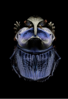 Microsculpture - Portraits d'insectes - Levon Biss